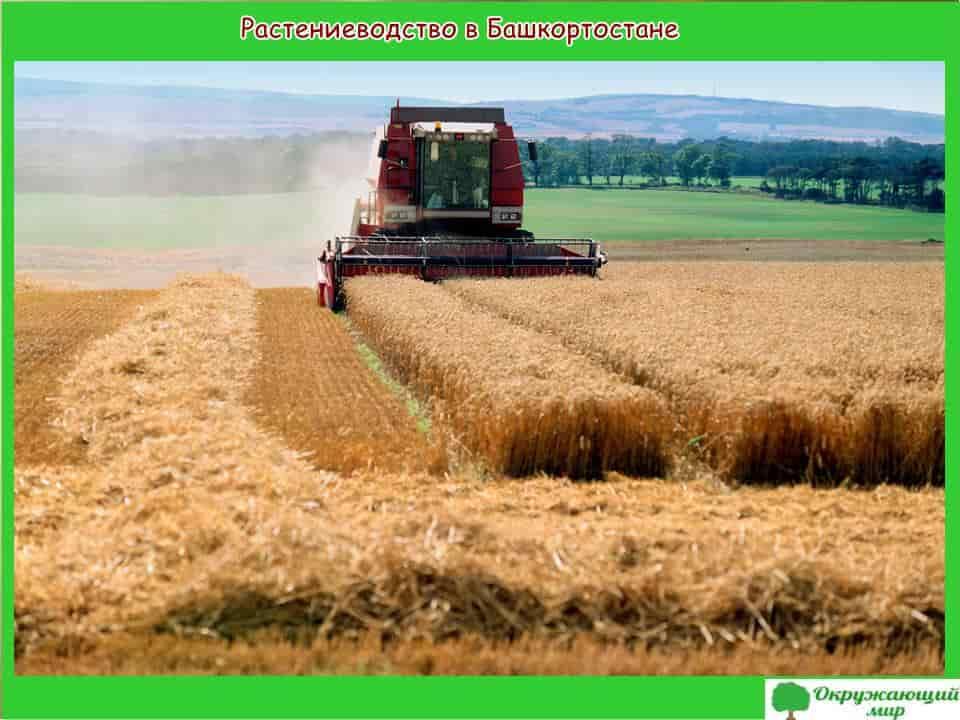 Растениеводство в Башкирии