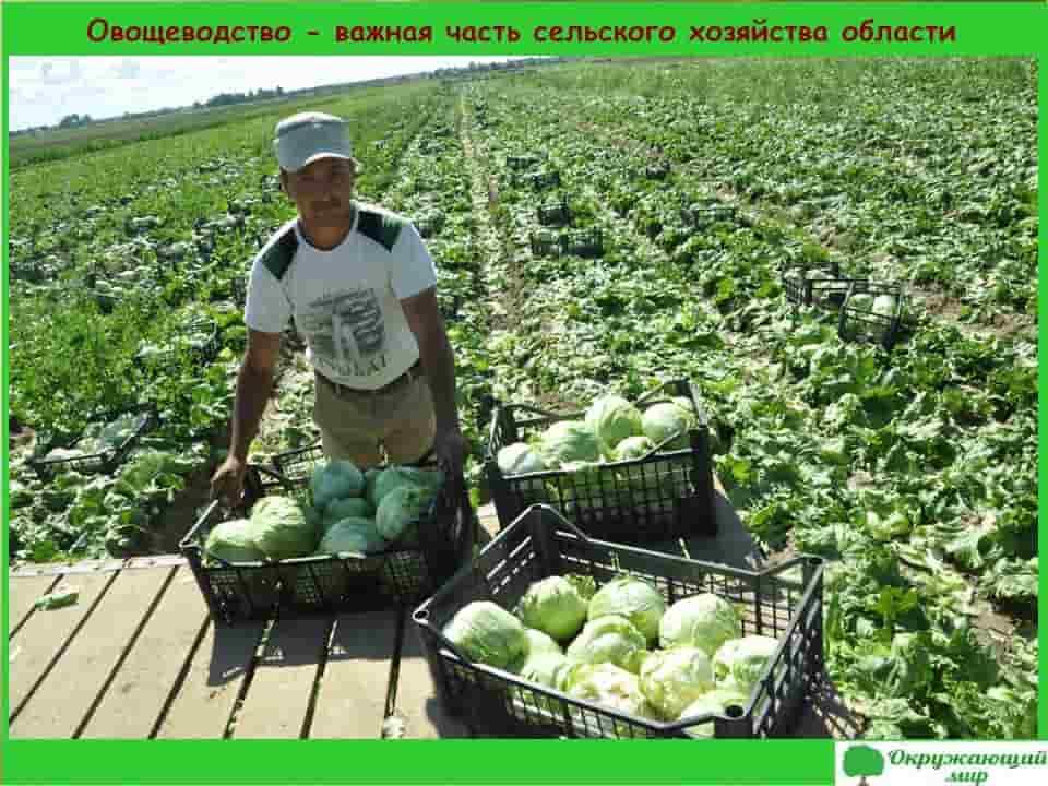 Овощеводство Ярославской области