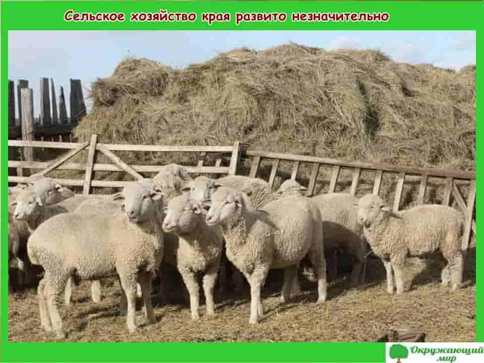 Сельское хозяйство Забайкальского края