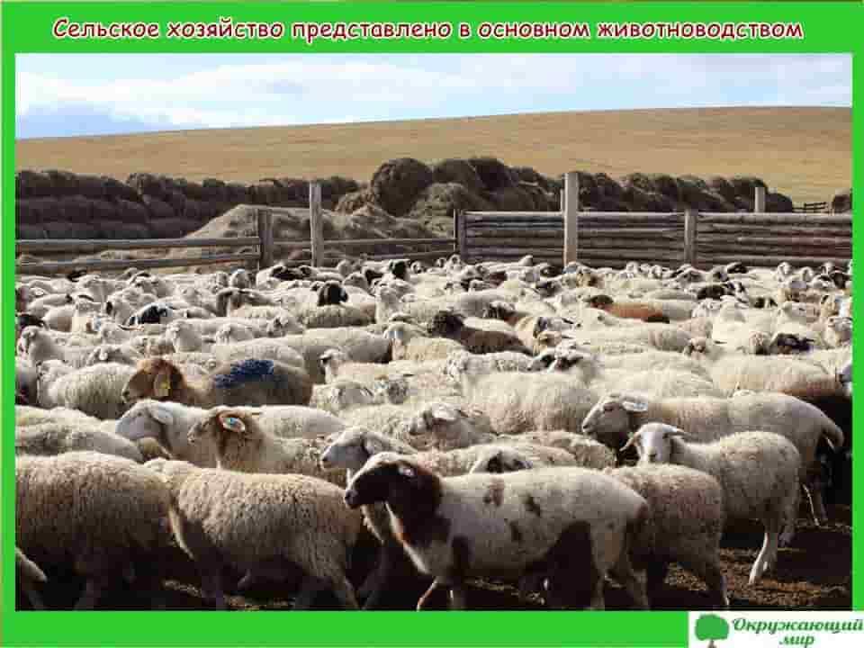 Сельское хозяйство представлено в основном животноводством