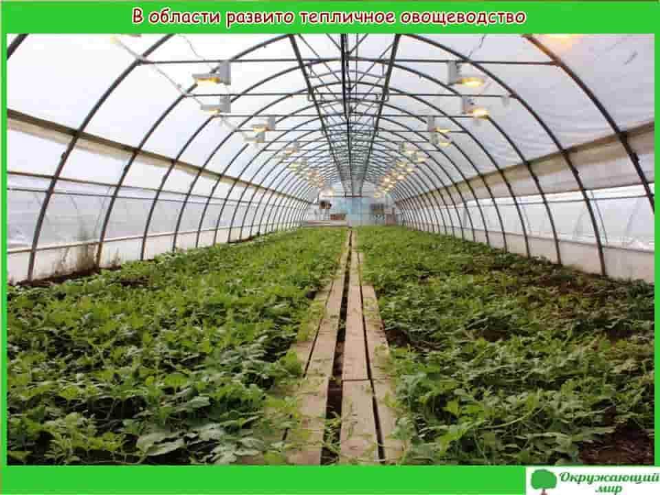 В области развито тепличное овощеводство