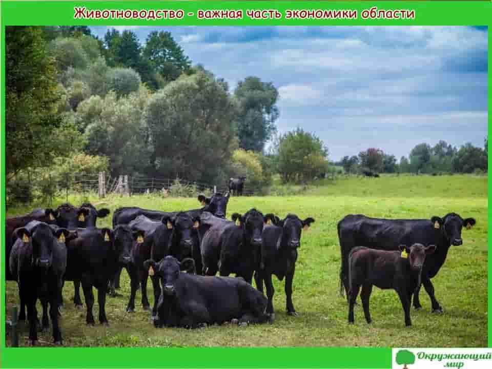 Животноводство Брянской области