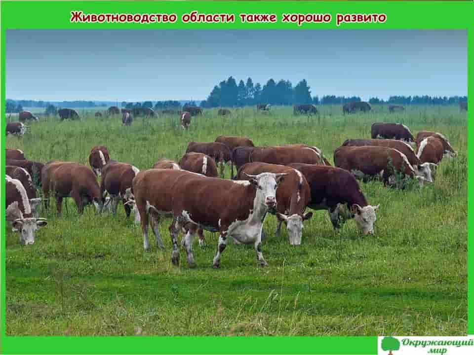 Животноводство Владимирской области