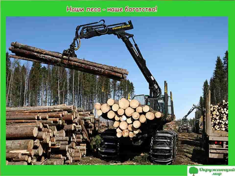 Наши леса наше богатство