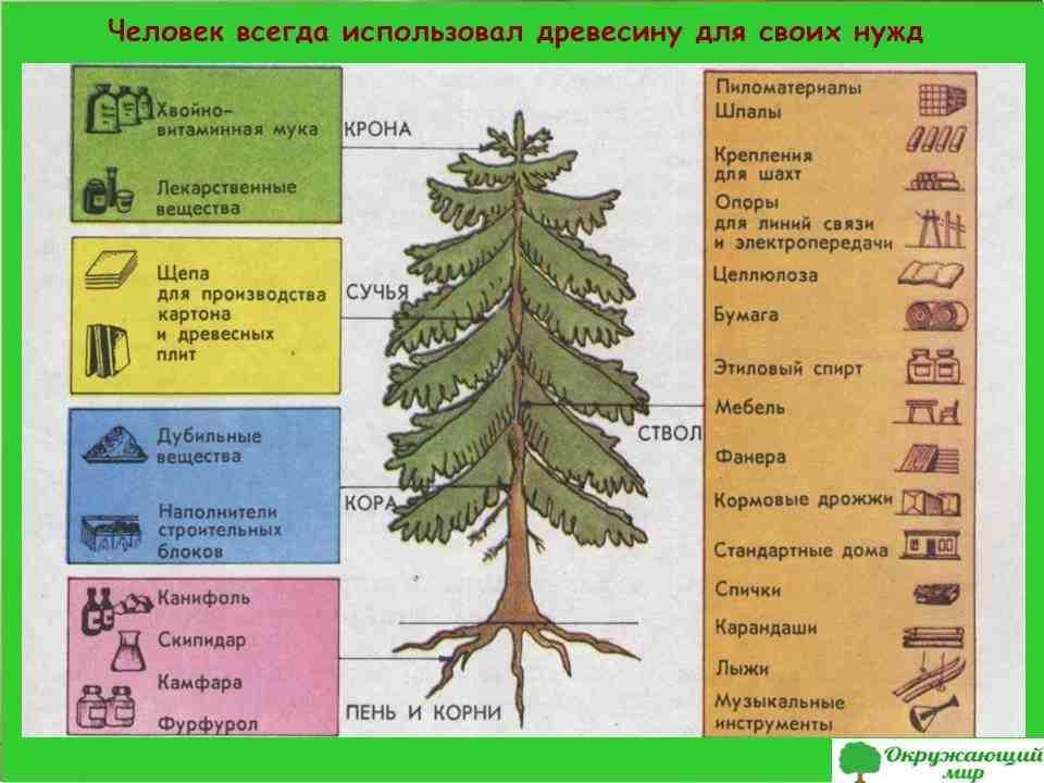 Древесина природное богатство