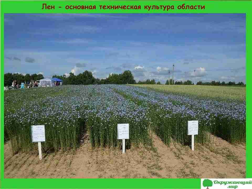 5. Лен - основная техническая культура Смоленской области