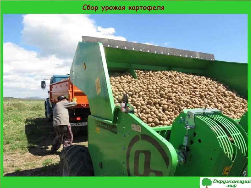 5. Сбор урожая картофеля в Сахалинской области