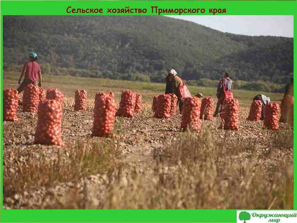 Сельское хозяйство Приморского края