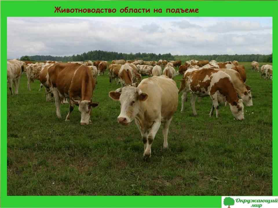 6. Животноводство области на подъеме