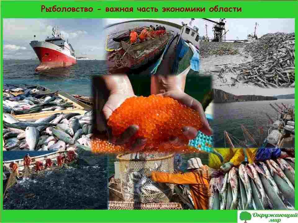 7. Рыболовство - важная часть экономики общества