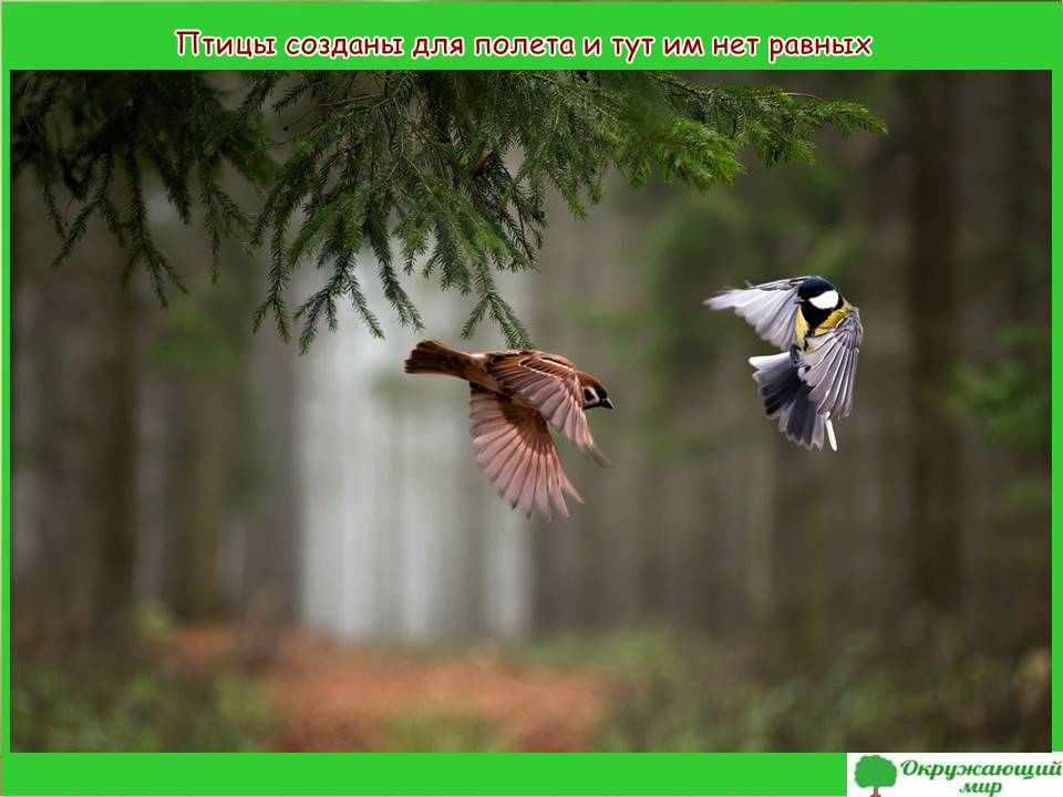 """Фоторассказ """"Красота животных"""""""