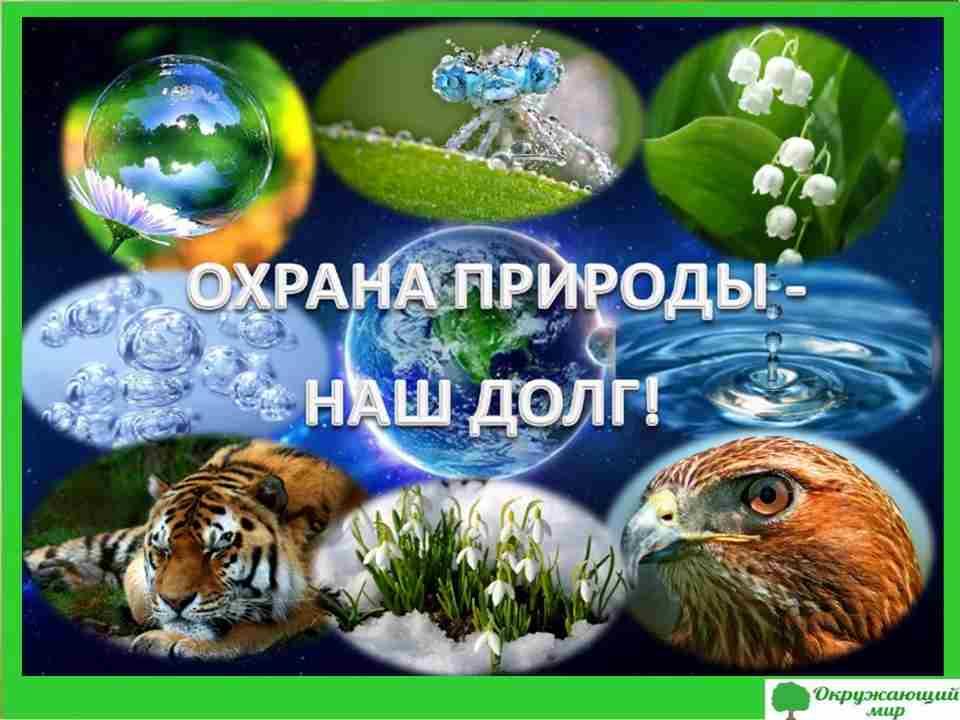 """Проект """"Что такое экология"""" 3 класс"""