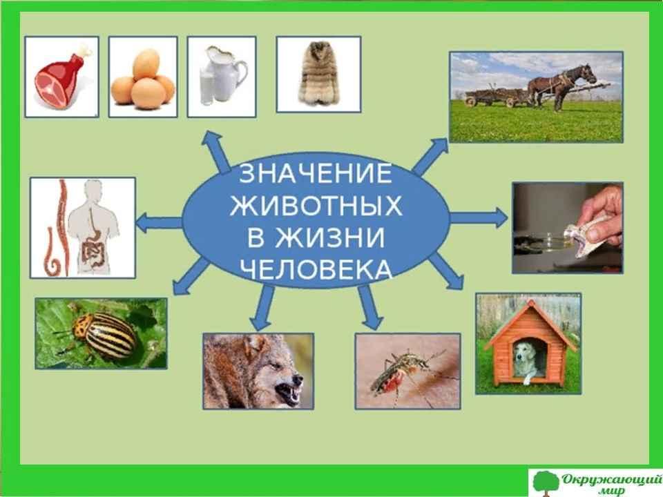 """Проект """"Охрана животных"""" 3 класс"""