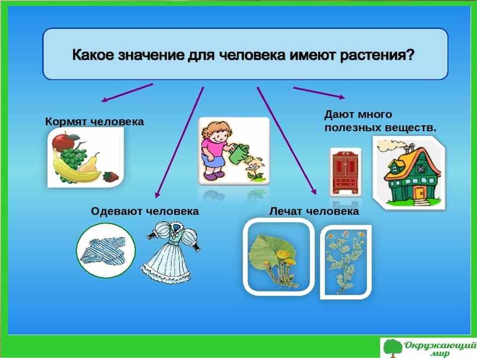 "Проект ""Охрана растений"", 3 класс"