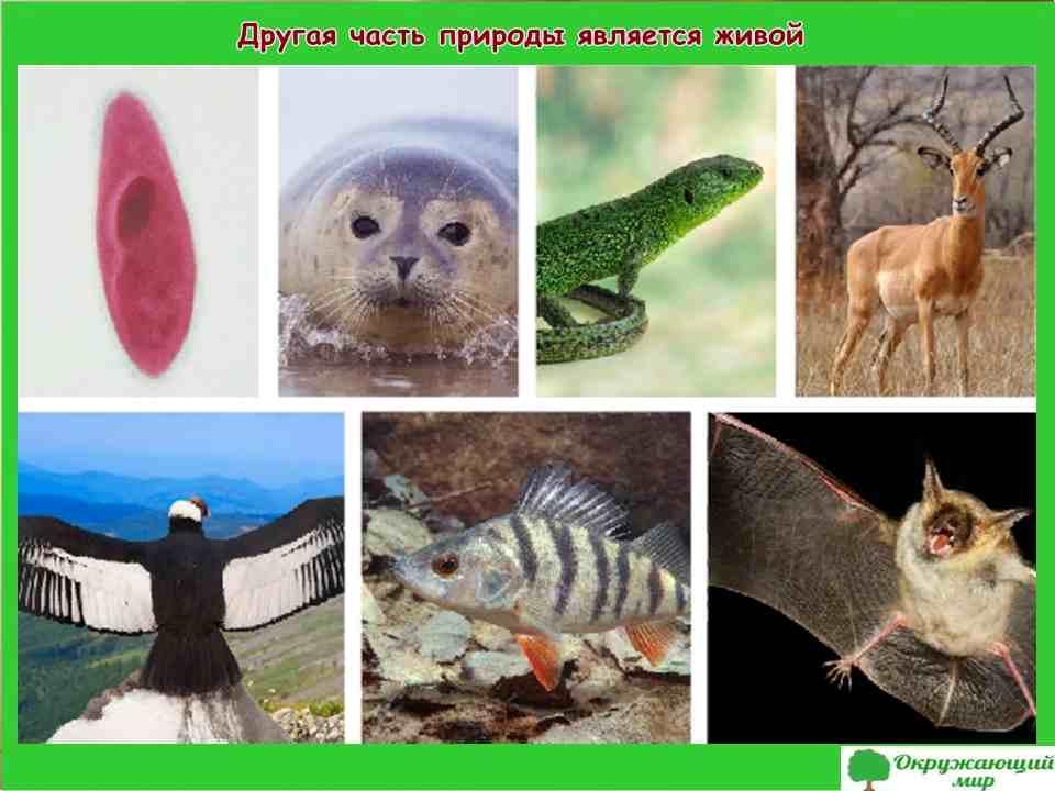 Проект «Живая и неживая природа». Окружающий мир, 2 класс