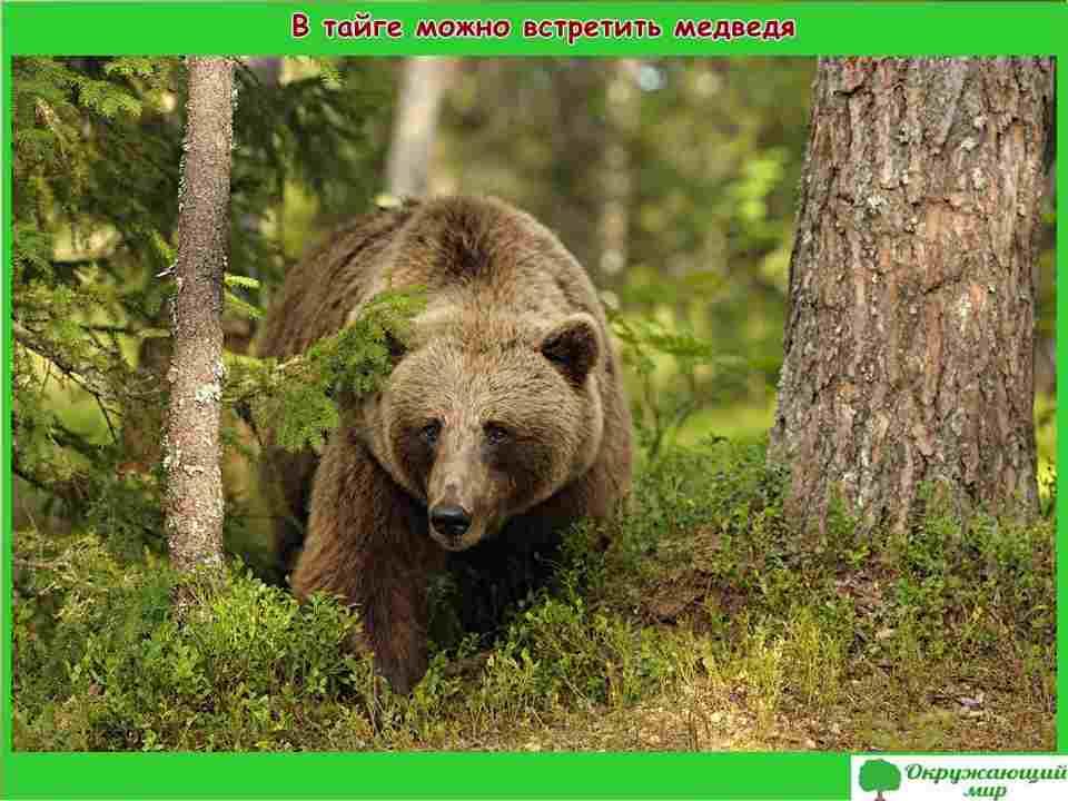 """Проект """"Разнообразие природы. Вологодская область"""" 3 класс"""