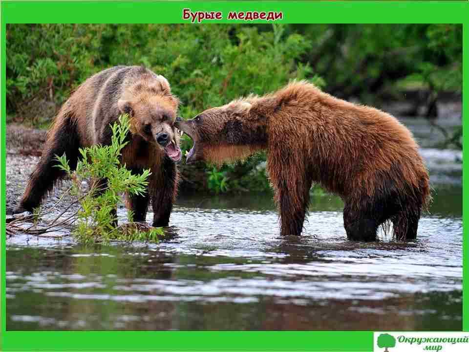 """Проект """"Разнообразие природы Камчатского края"""" 3 класс"""
