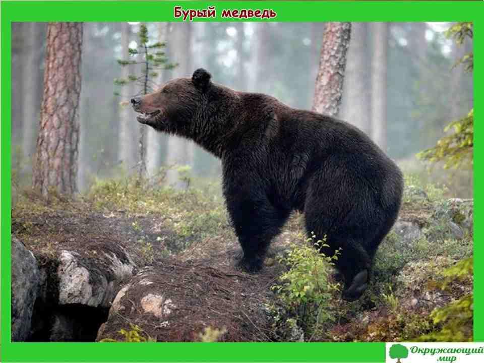 """Проект """"Разнообразие природы Карелии"""" 3 класс"""