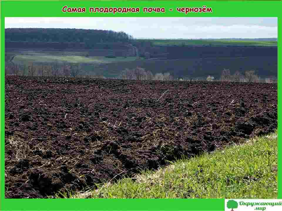 """Проект """"Что такое почва"""", 3 класс"""