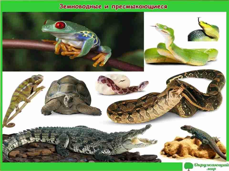 """Проект """"Разнообразие животных"""" 3 класс"""