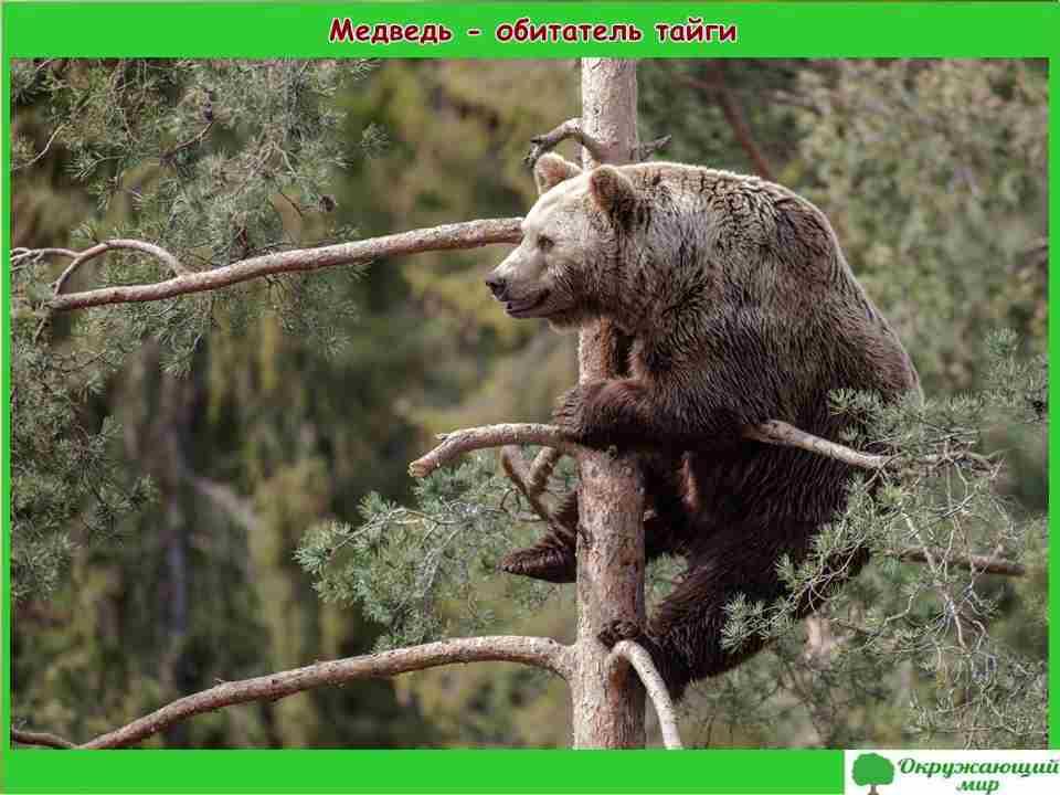 """Проект Разнообразие природы. Алтайский край"""" 3 класс"""