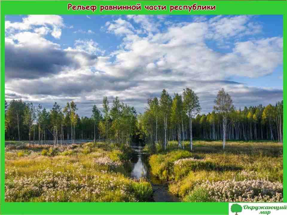 """Проект """"Разнообразие природы республики Коми"""" 3 класс"""