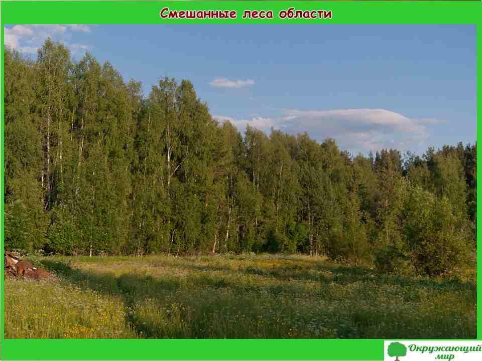 """Проект """"Разнообразие природы Костромской области"""" 3 класс"""