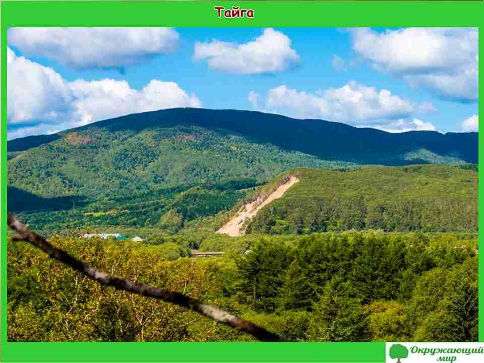 """Проект """"Разнообразие природы Сахалинской области"""" 3 класс"""