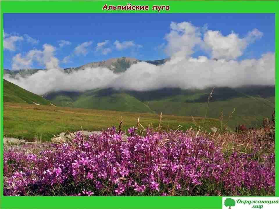 """Проект """"Разнообразие природы Северной Осетии"""" 3 класс"""